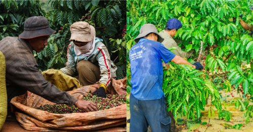Exploring geographical indication in coffee