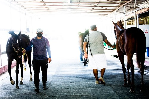Camarero Racetrack: A Money Machine that Runs on Injured and Abused Horses