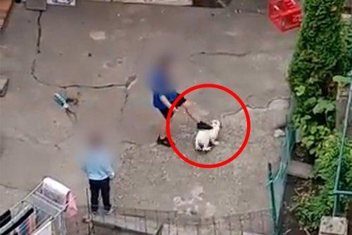 Video: Kind tritt Welpen immer wieder gegen den Kopf | PETA