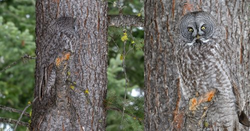 Photographer Spots Owl Perfectly Blending Into a Tree