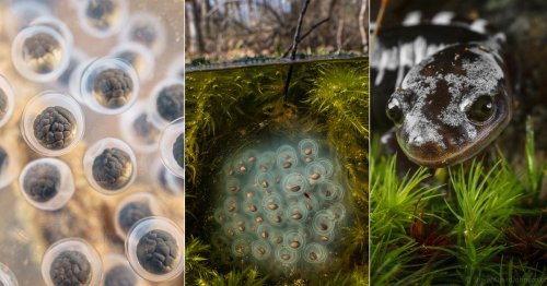 Stunning Macro Photos Captured Within the Unique World of Vernal Pools