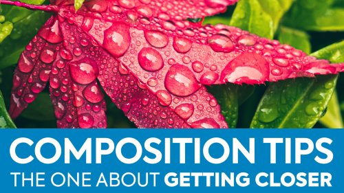 Photography Composition Tip and Assignment: Get Closer