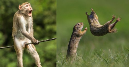 23 of the Funniest Finalists in the 2021 Comedy Wildlife Photo Awards