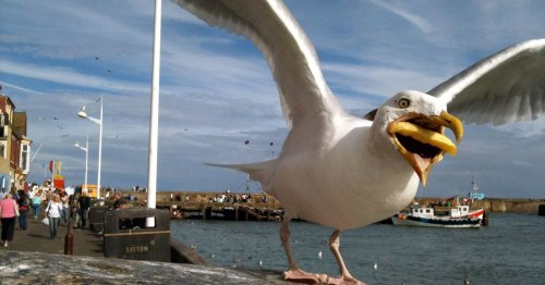 Google Buys Photographer's Shot of Seagull Chomping on a Fry