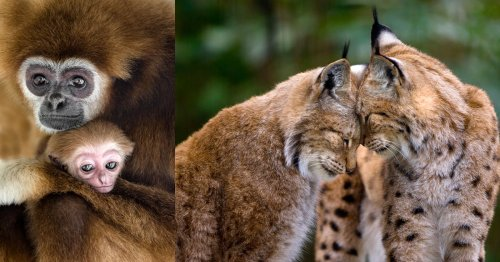 Photos of Love in the Animal Kingdom