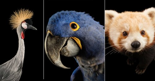 This NatGeo Photo Series Cherishes the Colors of Endangered Animals