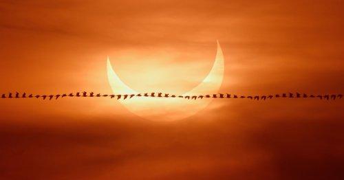Photographer Captures 'Bird Trail' Against a Solar Eclipse
