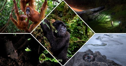 The Winners of the PA2F Environmental Photography Awards 2021