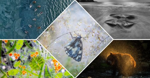 WildArt Photographer of the Year Unveils Winners of its 'Wet' Competition