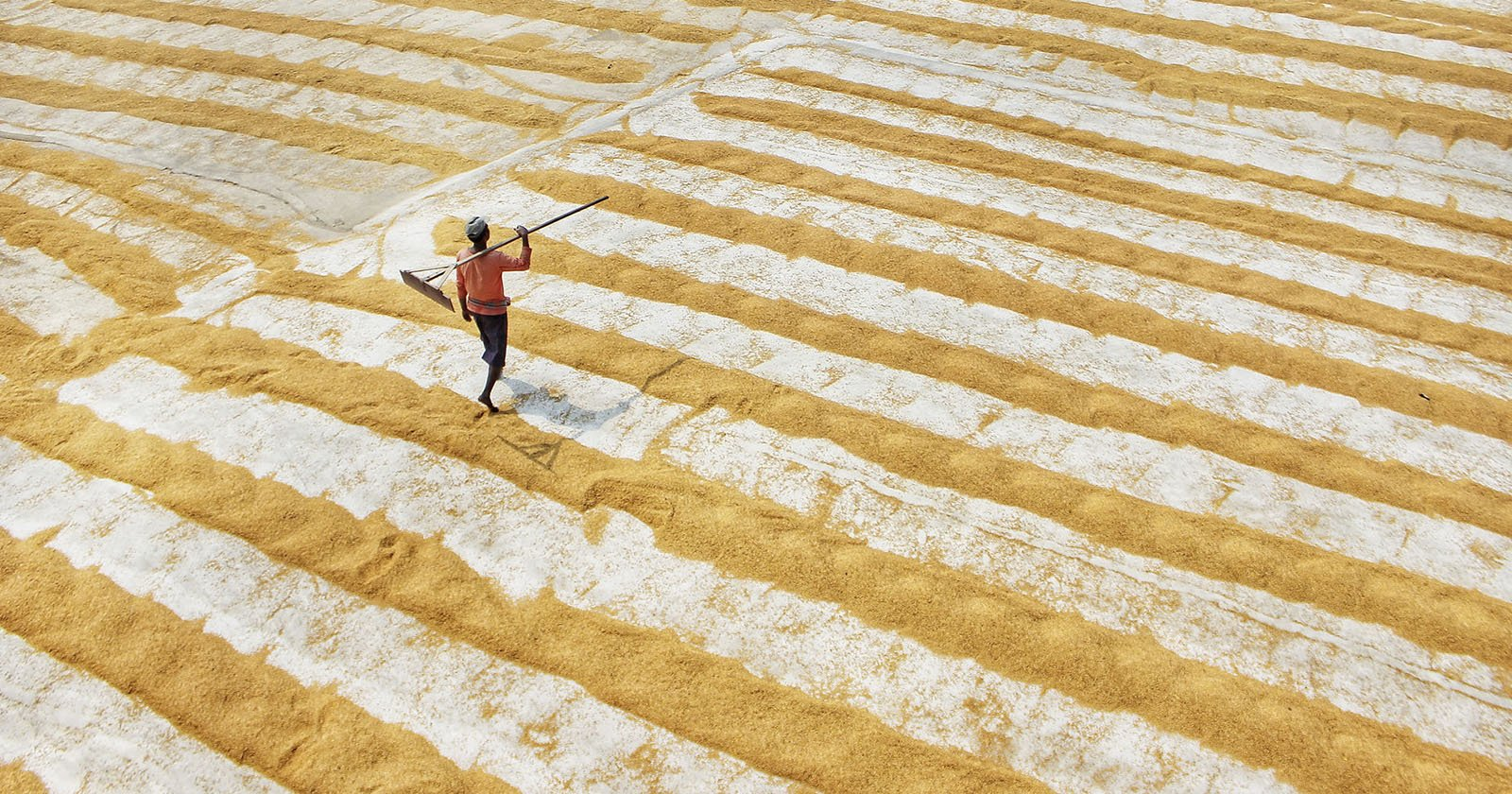 Beautiful Photos of Rice Fields in India Perfectly Leverage Composition