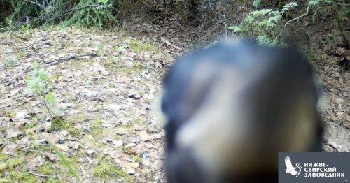 Watch a Woodpecker Methodically Demolish a Wildlife Camera