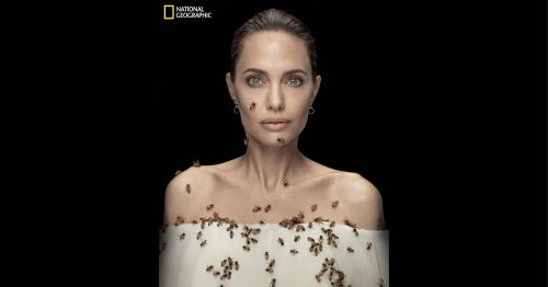 Angelina Jolie Photographed Covered in Bees To Support Conservation