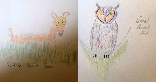 Wildlife Photographer's Camera Fails, Humorous Drawings Ensue