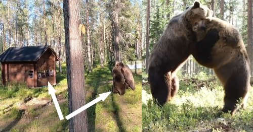 Epic Bear Fight Goes Down Feet Away from Camera Crew