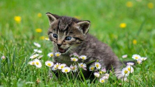 Katzenbilder: Das sind die 23 süßesten Katzenbabys