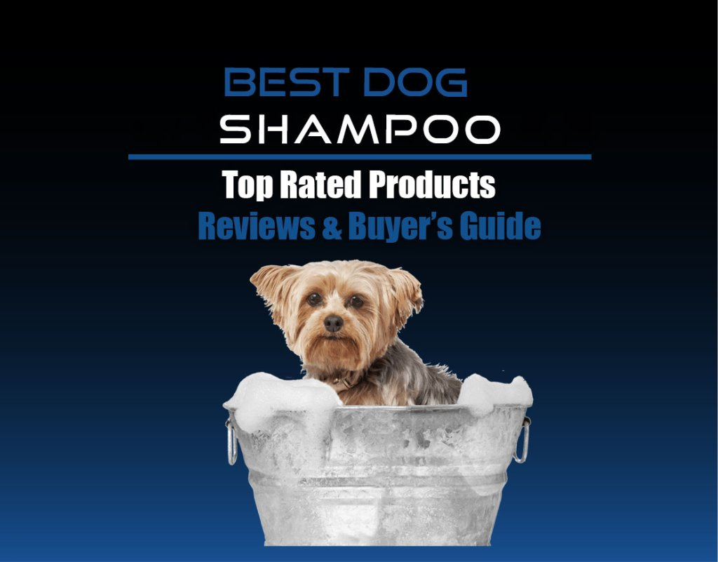Best Shampoo For Dogs Reviews - cover