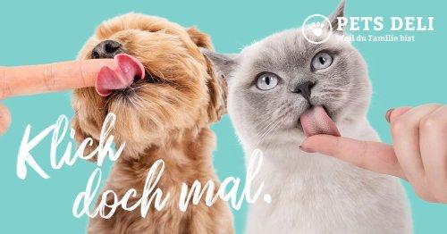Der Bürohund - Gute Gründe, deine Fellnase mit zur Arbeit zu nehmen - Pets Deli