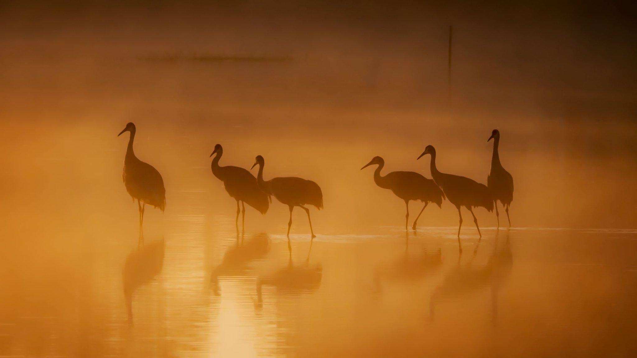 Capturing more striking bird photographs