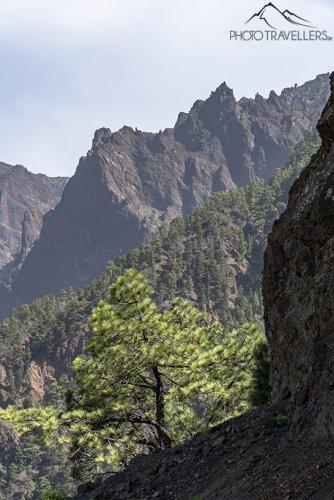 La Palma Wanderungen: diese 10 Touren musst du machen