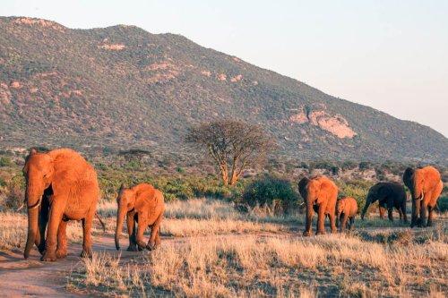 Kenia Top-7-Nationalparks und Reservate - alle Infos und Hotel-Tipps + Karte