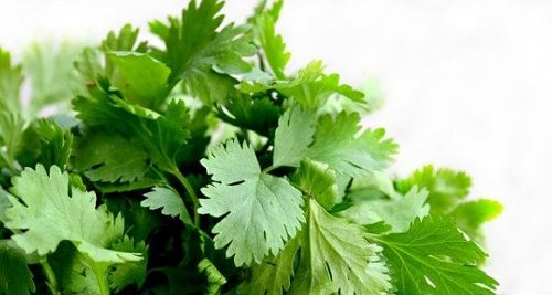 Coriander Water for Diabetes: Here's how THIS magic drink can help you to manage blood sugar levels