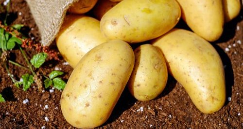 Check out THESE delicious and super quick potato recipes that you can try at home
