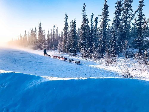 Dog Sledding Tours for Beginners in the US | Places.Travel