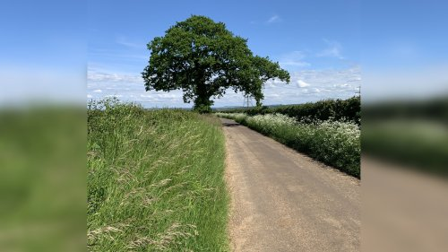 Here's why Wiltshire Council are leaving some grassy areas uncut