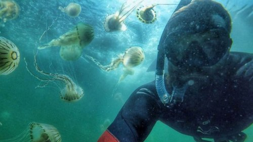 Man swims with 10,000 stinging jellyfish on popular Donegal beach