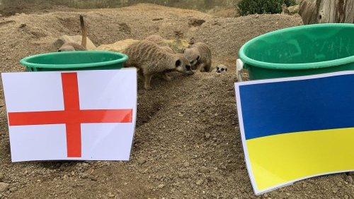 Sussex's 'mystic meerkats' predict England vs Ukraine