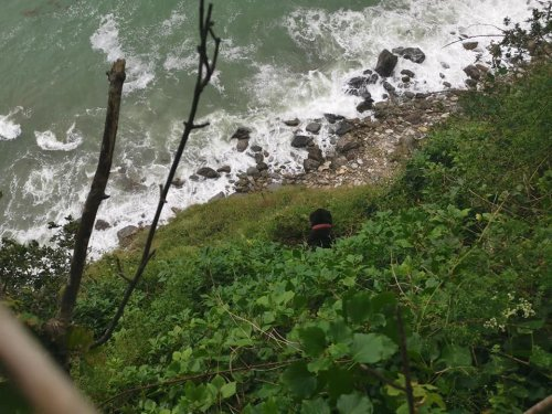 Dog reunited with owners after falling over cliff near St Austell
