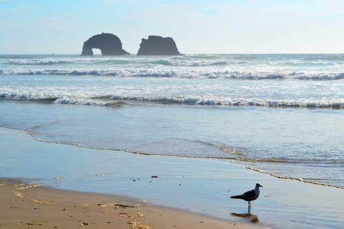 12 Top-Rated Things to Do in Rockaway Beach, OR | PlanetWare