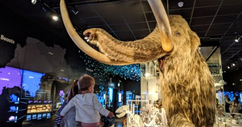 A mammoth moment for The Box: Name the museum's largest resident