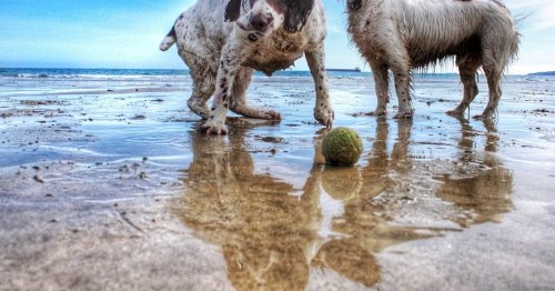 Devon named second most dog-friendly seaside spot in UK