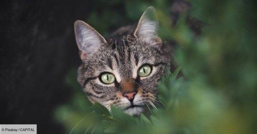 Cri d'alarme d'un couple : leur maison est envahie par... des chats
