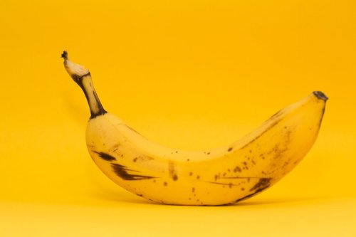Bananas Have Died Out Once Before - aeon - Pocket