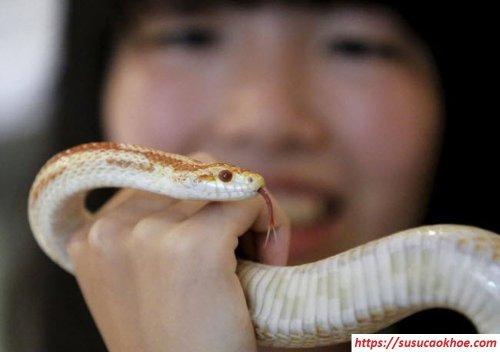 giải mã giấc mơ thấy rắn là điềm gì, đánh con gì, tốt hay xấu