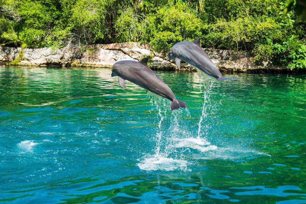 Xel Ha vs Xcaret: A Review of Mexican Adventure Parks