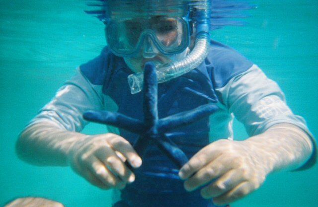 Diving in Fiji from Castaway Island