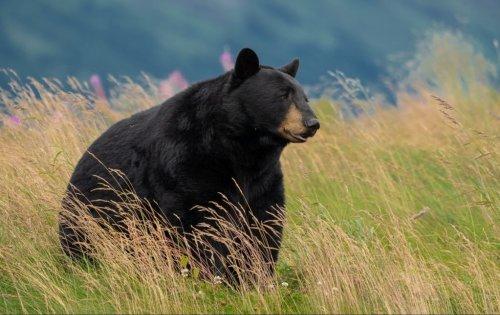 Alaska's Last Great Frontier!