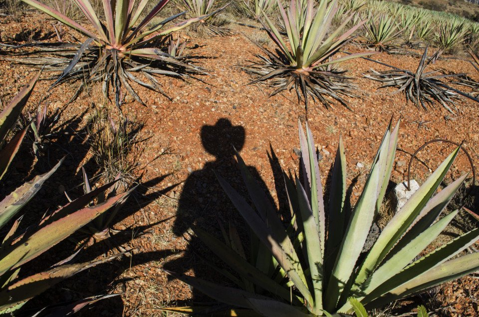 Oaxacan Mezcal and the Passion of One Man