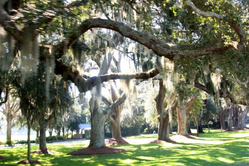 Travel to Savannah, Georgia!