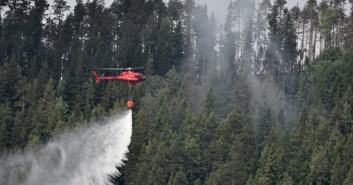 Sweden goes to war over its forests