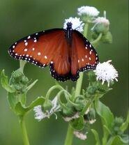 Phoenix ponds attract birds and butterflies