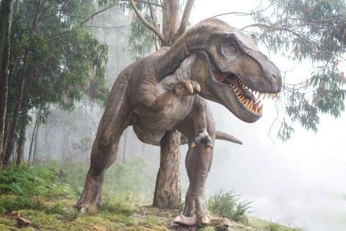 Kaç Tane T. Rex Vardı? Milyarlarca! - Popular Science