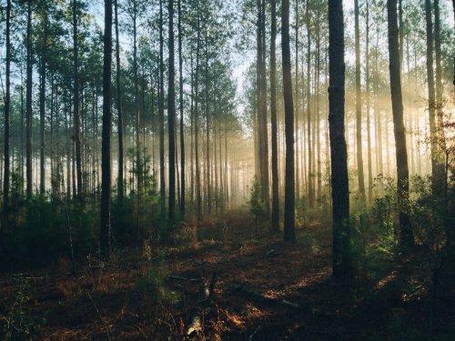 Ormanlarımız, 2050 Yılında İklimsel Bir Taşma Noktasına Doğru İlerliyor - Popular Science