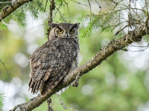 Transform your yard into an owl kingdom