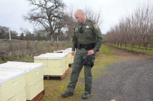 Bee theft is almost a perfect crime—but there's a new sheriff in town