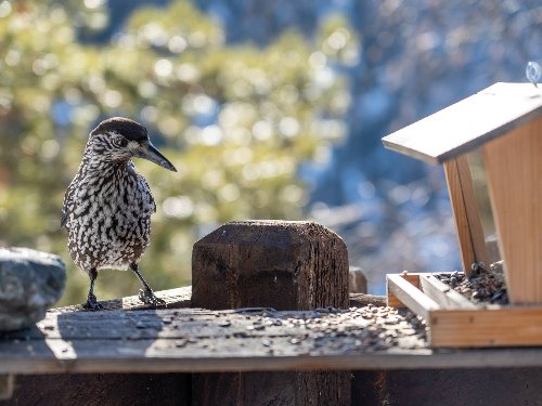 Protect yourself and wildlife by cleaning your bird feeder | Popular Science