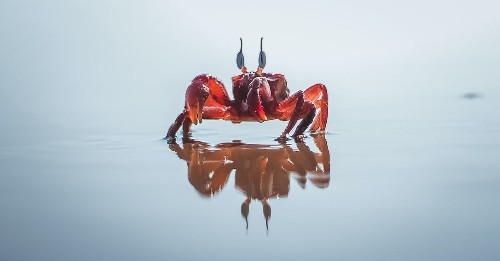 Why everything eventually becomes a crab
